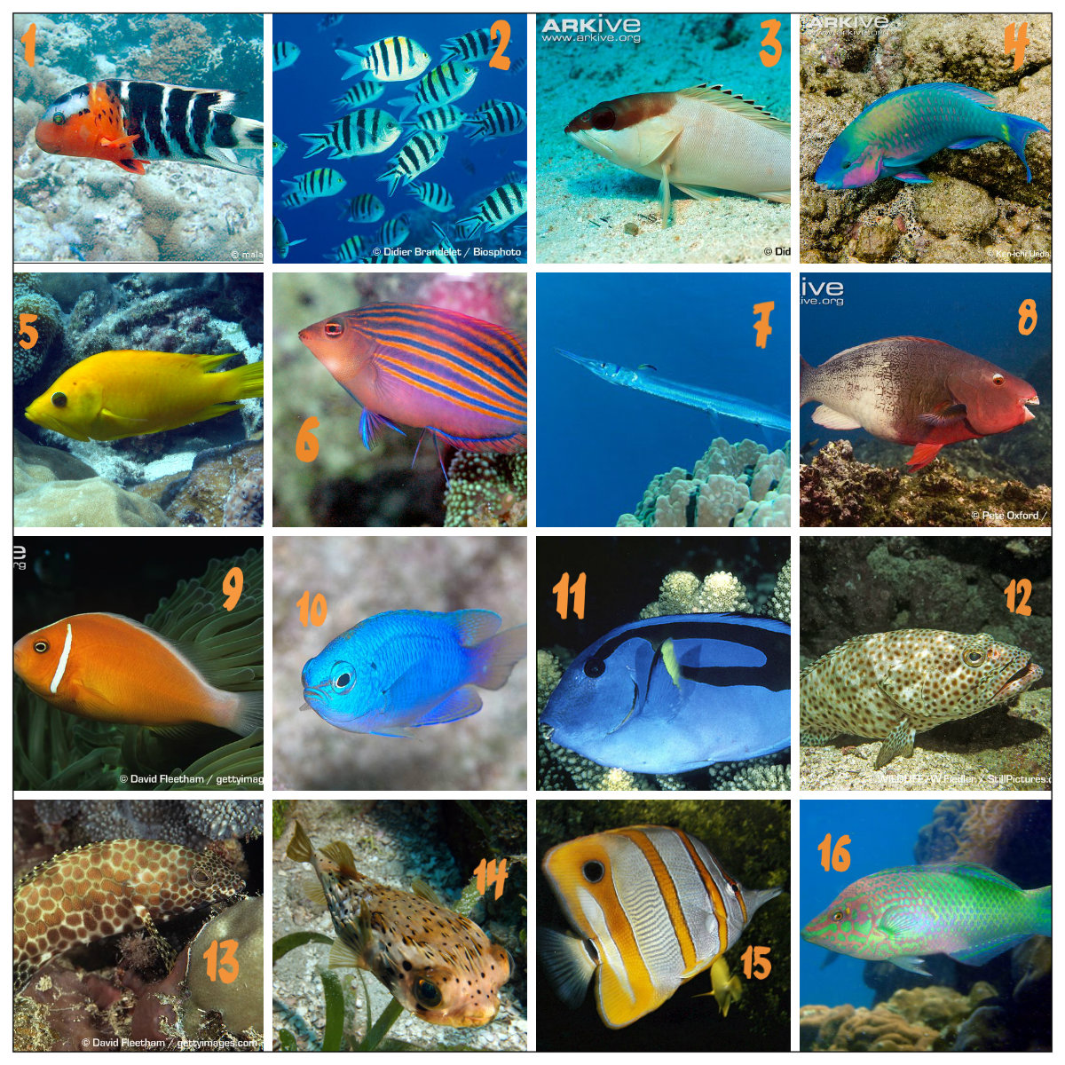 Pics for marine fish with names for Saltwater fish names